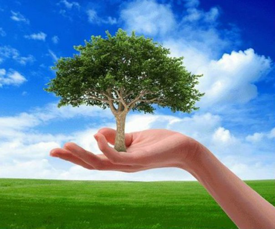 our environment essay wikipedia When essay on save our environment wikipedia it comes to essay writing, an in-depth research is a big deal our experienced writers are professional in many fields of knowledge so that they can thank god for the atom bomb and other essays assist you.